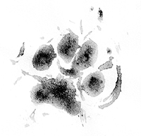 Power Paw Print
